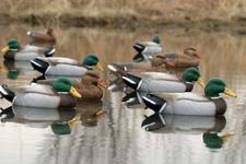 Чучела для охоты: чучела уток и гусей как выбрать