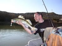 Ловля судака на живца - особенности ловли и сохранения живца.