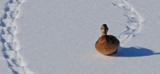 Следы животных и птиц на снегу